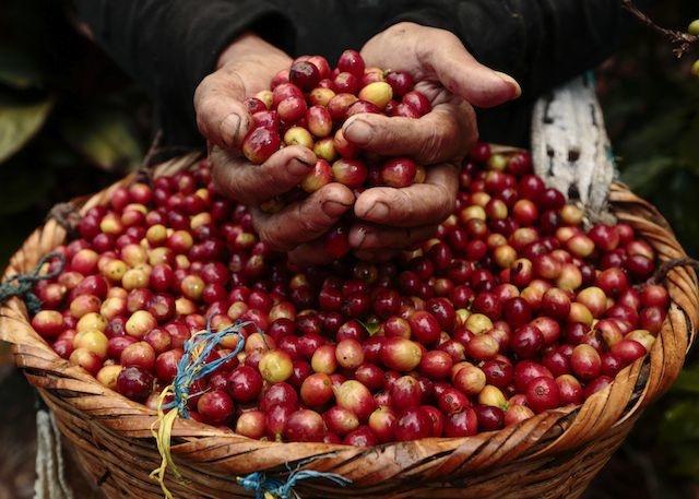 Thị trường nông sản 9/11: Giá tiêu, cà phê tăng theo đà tăng thế giới - Ảnh 2.