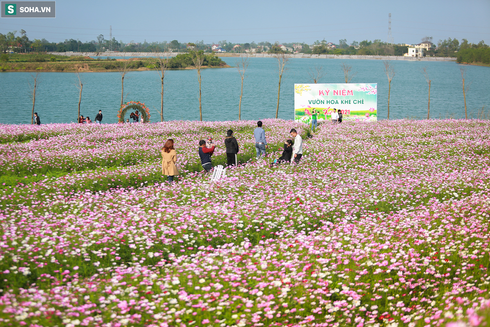 Mê mẩn cánh đồng hoa sao nhái đầy màu sắc được giới trẻ săn tìm để check-in ở Quảng Bình - Ảnh 2.