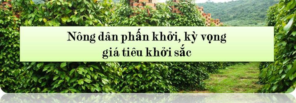 Triển vọng tươi sáng cho ngành hồ tiêu Việt Nam - Ảnh 1.