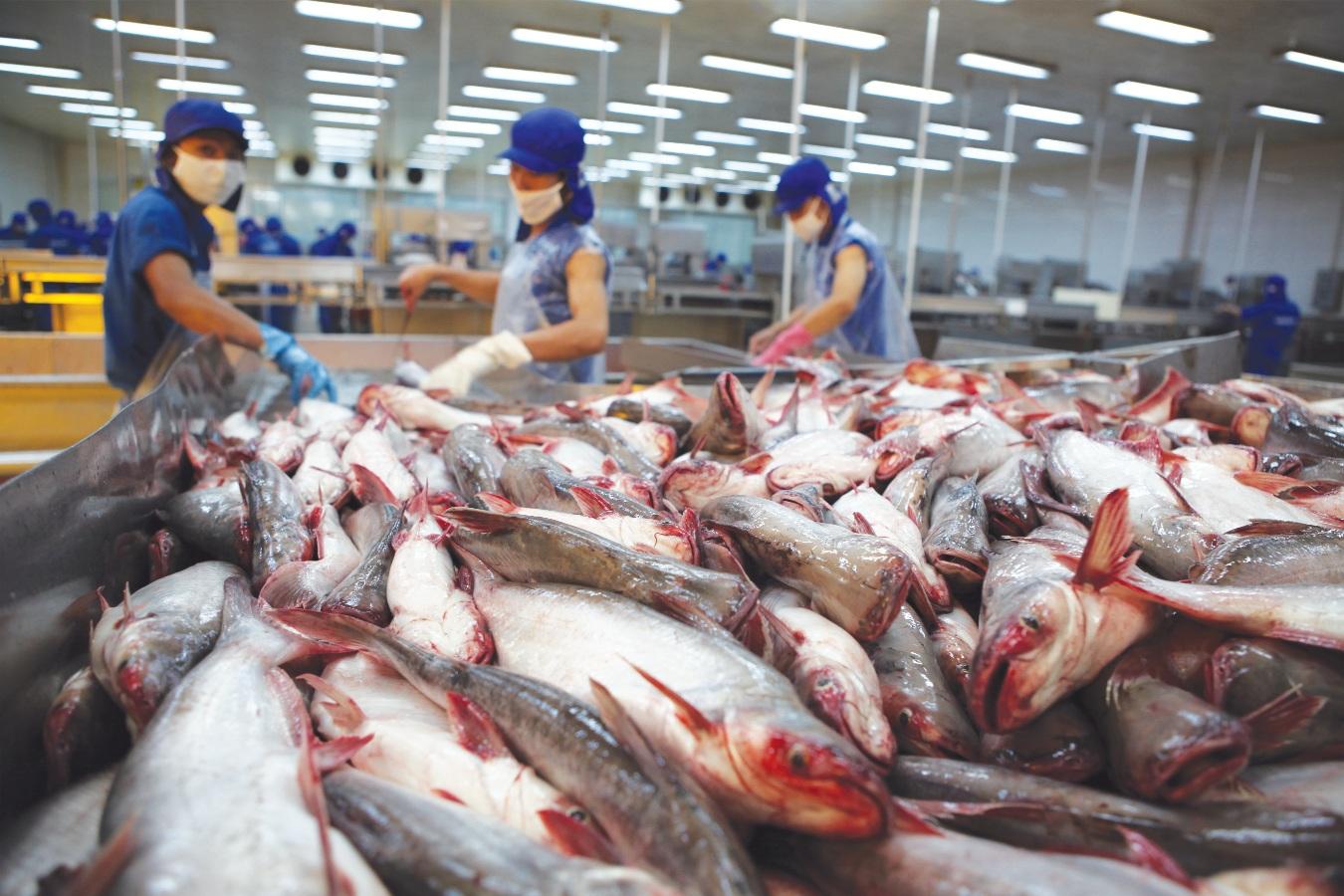 VASEP dự báo kim ngạch xuất khẩu thủy sản 2021 có thể đạt 9 tỷ USD - Ảnh 7.