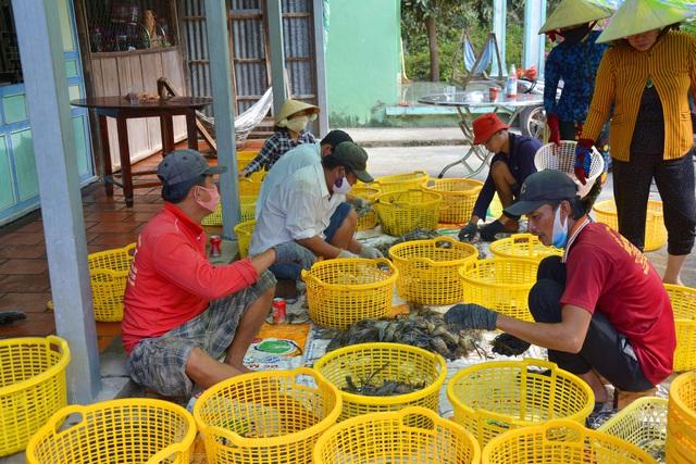 Kiên Giang: Mãn nhãn cảnh người dân thu hoạch tôm càng xanh - Ảnh 7.