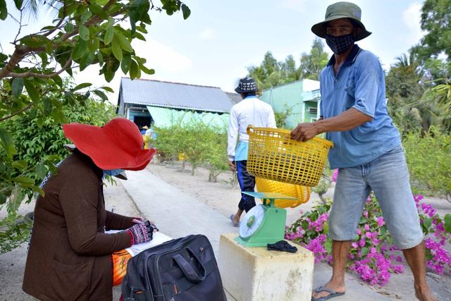 Kiên Giang: Mãn nhãn cảnh người dân thu hoạch tôm càng xanh - Ảnh 8.