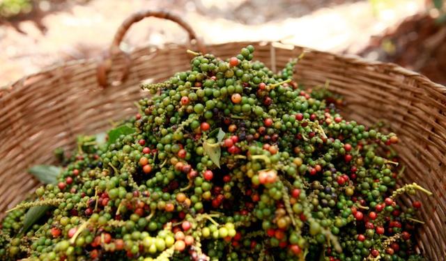 Thị trường nông sản 9/11: Giá tiêu, cà phê tăng theo đà tăng thế giới - Ảnh 1.