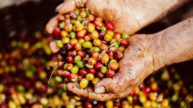 Thị trường nông sản ngày 4/5: Giá tiêu trong nước chưa có dấu hiệu phục hồi - Ảnh 2.