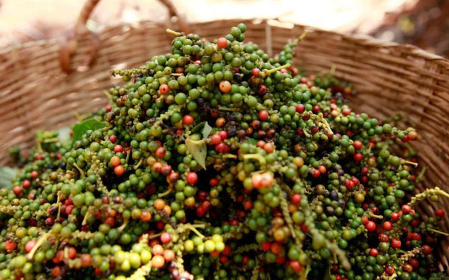 Thị trường nông sản 9/11: Giá tiêu, cà phê tăng theo đà tăng thế giới