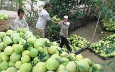 Chile mở cửa thị trường cho bưởi Việt Nam